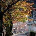 紅葉の桜小路
