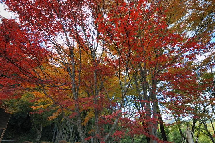 無料で使える城崎温泉の写真集。城崎美術館前の紅葉 その2