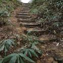 大師山山頂への道 その3
