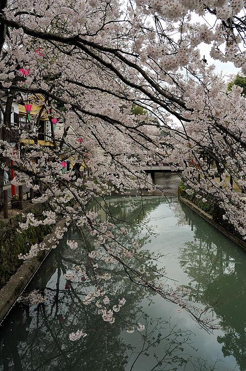 http://photo.kinosaki2.net/sakura/1702.html