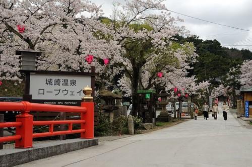 http://photo.kinosaki2.net/sakura/1878.html