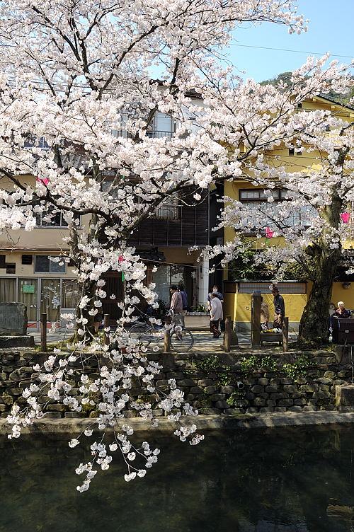 http://photo.kinosaki2.net/sakura/1704.html