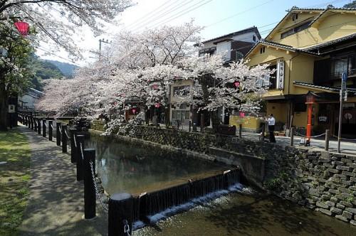 http://photo.kinosaki2.net/sakura/1736.html
