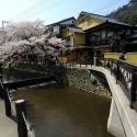 木屋町通りの桜 その9