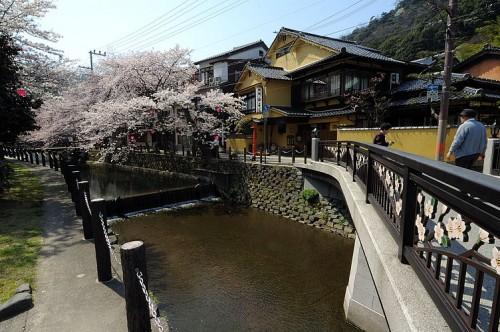 http://photo.kinosaki2.net/sakura/1722.html