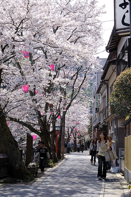 http://photo.kinosaki2.net/sakura/1708.html