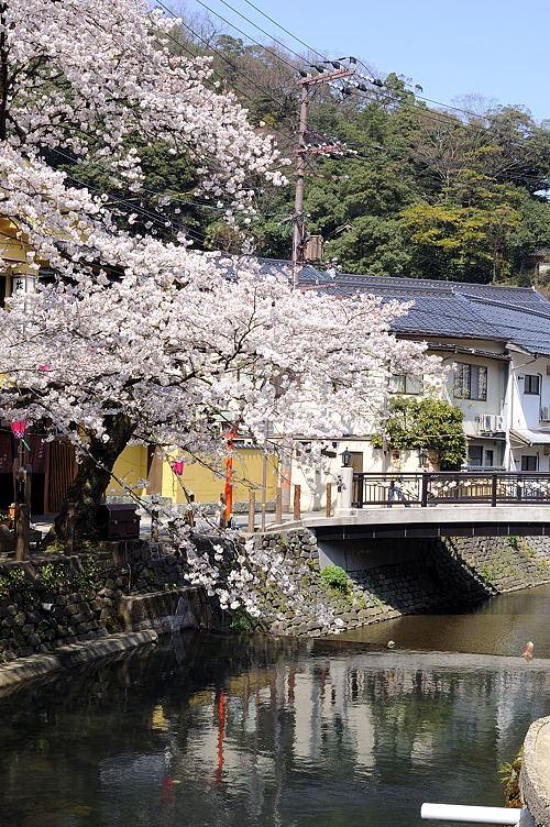 http://photo.kinosaki2.net/sakura/1719.html