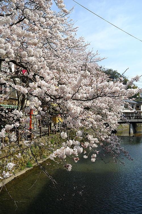 http://photo.kinosaki2.net/sakura/1747.html