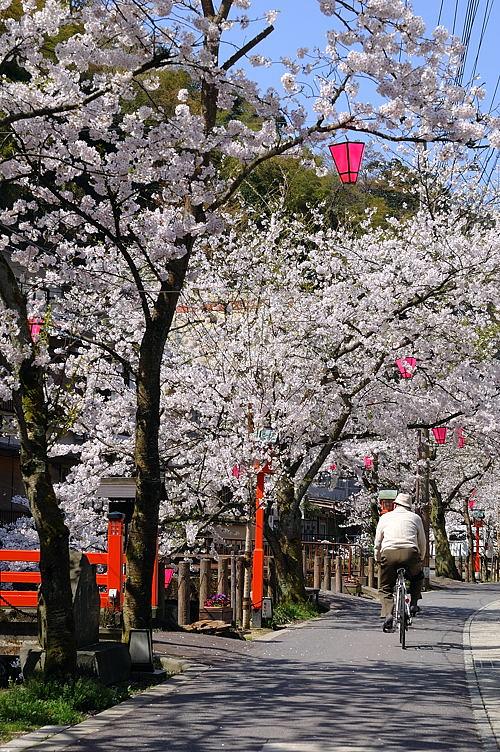 http://photo.kinosaki2.net/sakura/1715.html