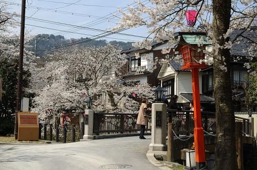 http://photo.kinosaki2.net/sakura/1730.html