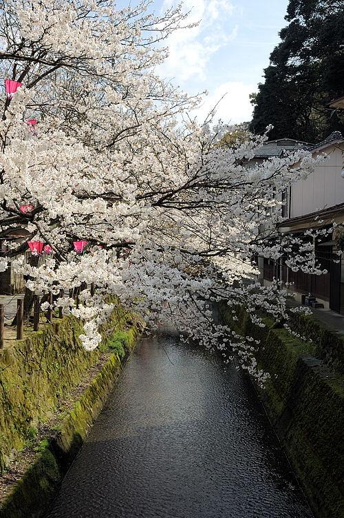 http://photo.kinosaki2.net/sakura/1772.html