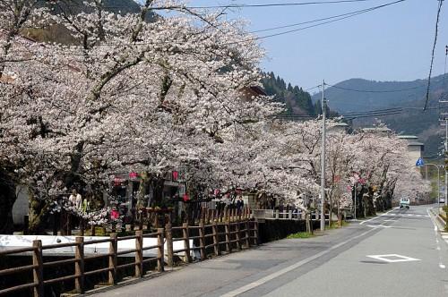 http://photo.kinosaki2.net/sakura/1889.html