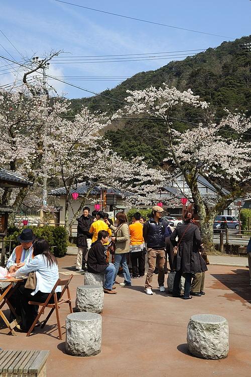 http://photo.kinosaki2.net/sakura/1886.html