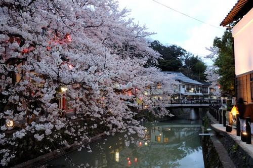 http://photo.kinosaki2.net/sakura/1780.html