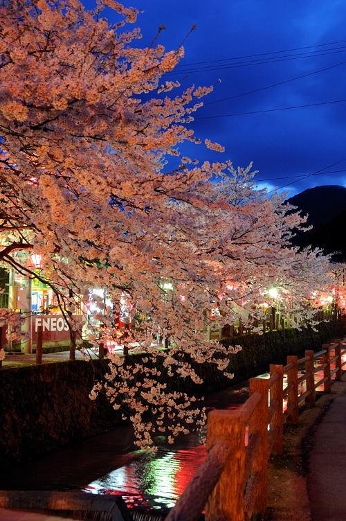 http://photo.kinosaki2.net/sakura/1850.html