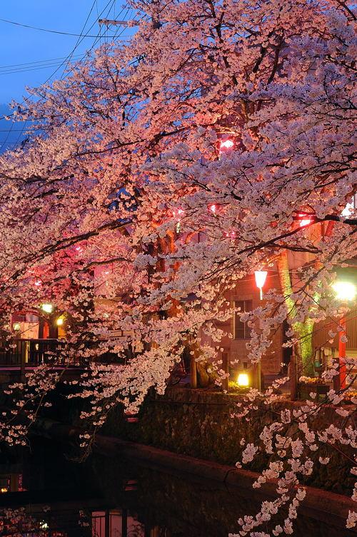 http://photo.kinosaki2.net/sakura/1791.html