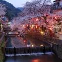 木屋町通りの夜桜 その1
