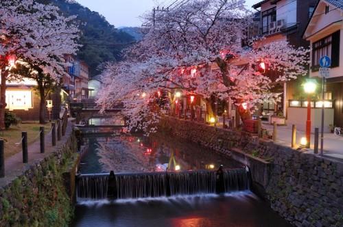 http://photo.kinosaki2.net/sakura/1775.html