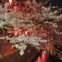 木屋町通りの夜桜 その9
