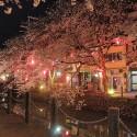 木屋町通りの夜桜 その10