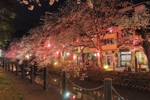 http://photo.kinosaki2.net/sakura/1803.html