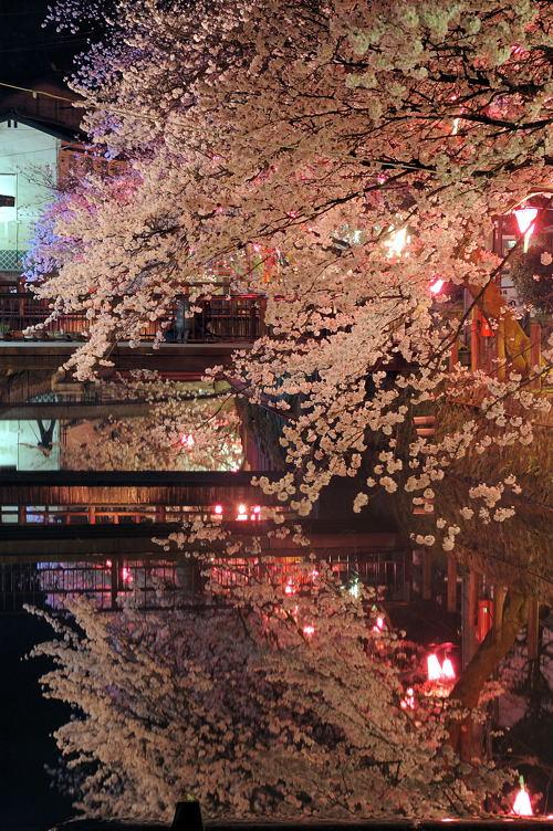 http://photo.kinosaki2.net/sakura/1797.html