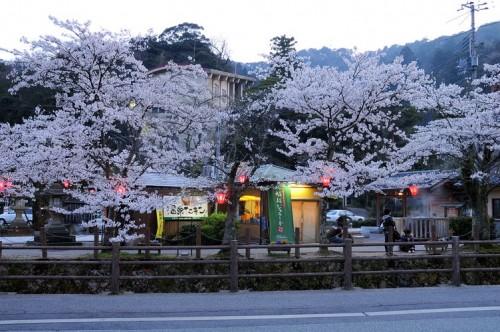 http://photo.kinosaki2.net/sakura/1860.html
