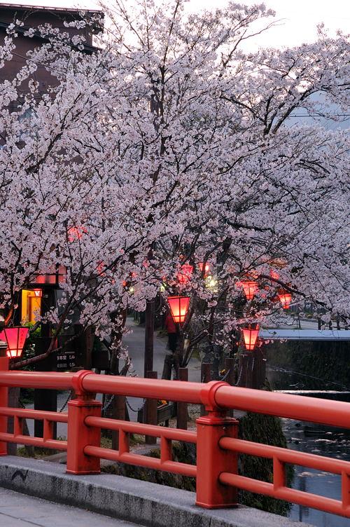 http://photo.kinosaki2.net/sakura/1865.html