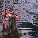 大谿川上流の桜並木 その8