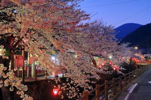 http://photo.kinosaki2.net/sakura/1847.html