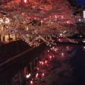 木屋町通りの夜桜 その7