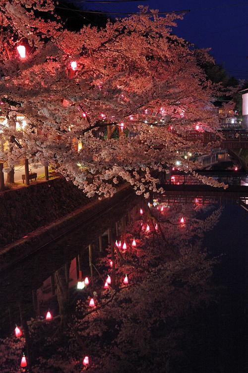 http://photo.kinosaki2.net/sakura/1794.html