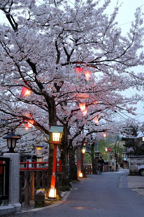 http://photo.kinosaki2.net/sakura/1840.html