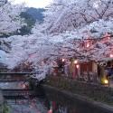 木屋町通りの夜桜 その16
