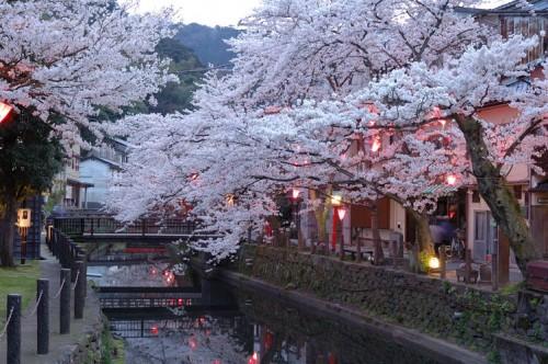 http://photo.kinosaki2.net/sakura/1826.html