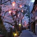 木屋町通りの夜桜 その19