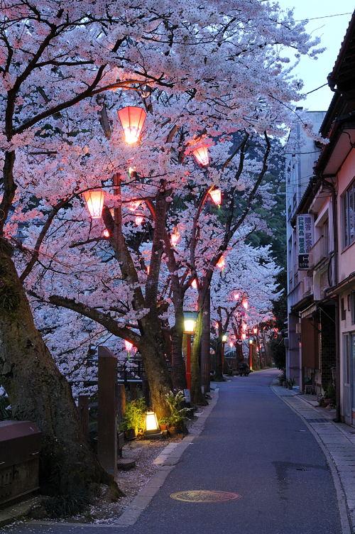 http://photo.kinosaki2.net/sakura/1837.html