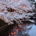 木屋町通りの夜桜 その18