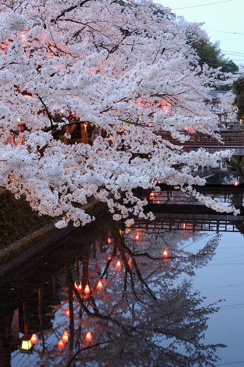 http://photo.kinosaki2.net/sakura/1833.html