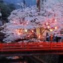 木屋町通りの夜桜 その14