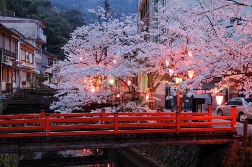 http://photo.kinosaki2.net/sakura/1820.html