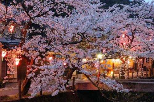 http://photo.kinosaki2.net/sakura/1817.html