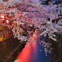 木屋町通りの夜桜 その11
