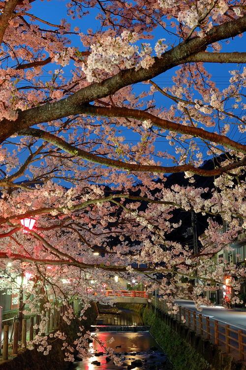 http://photo.kinosaki2.net/sakura/1854.html