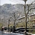 柳並木と大師山