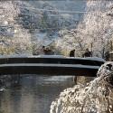 柳と雪と太鼓橋