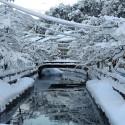 城崎温泉は大雪です