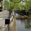 大谿川沿いの柳並木