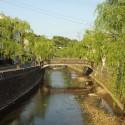 大谿川と柳並木