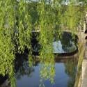 城崎温泉のシンボル「柳」